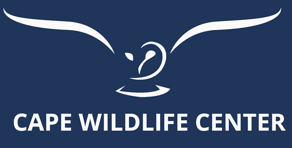 Cape Wildlife Center